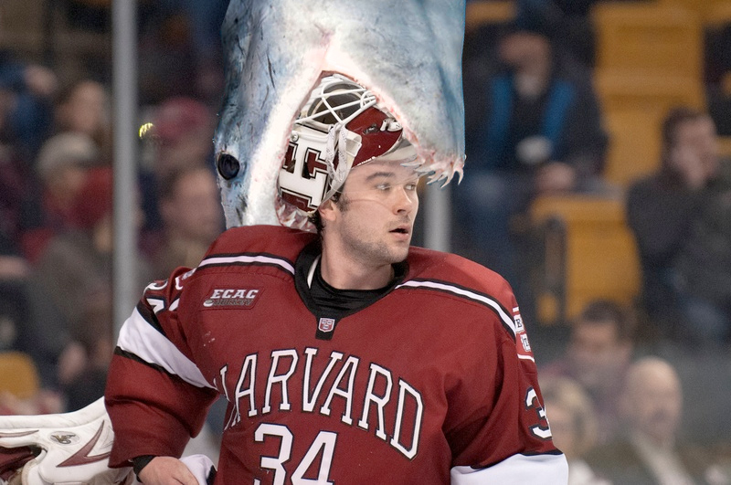 Live Shark Thrown on Lynah Rink