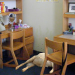 Gross! This Roommate Forgot to Throw Out His Decomposing Goat Carcass Before Break