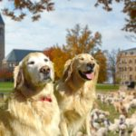 Mental Health Win: Cornell Health Releases 40 Therapy Dogs into the Wild