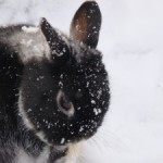 Adorable Animals Confused by Recent Temperatures, Freeze To Death Over Night