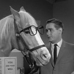 Law School Breeds Hyper-Intelligent Horse Lawyers